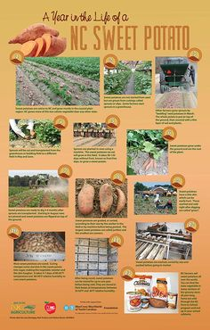 67 Best NC Cooperative Extension (Recipes & Information