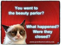 Grumpy Cat Quotes, Grumpy Cat Humor, Funny Cat Memes, Grumpy Cats, Cats Humor, Funny Kitties, Pet Memes, Memes Humor, Kitty Cats