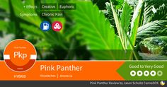 Pink Panther Cannabis Strain