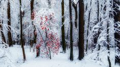 Hello Winter! by jeso