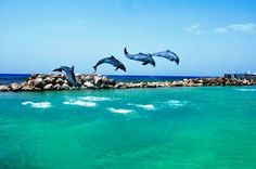 Dolphin Cove is one of the many Things to do in Jamaica