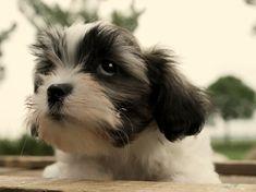 JW_SIG_NAVTIP Boomer pups