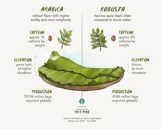 Arabica Coffee vs. Robusta Coffee | 1912 Pike