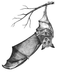 fuck yeah - If I named my daughter Stella Luna I'd want this on the nursery wall. Animal Drawings, Art Drawings, Hanging Bat, Stellaluna, Future Tattoos, Cool Tattoos, Bat Tattoos, Sleeve Tattoos, Animal Sleeve Tattoo