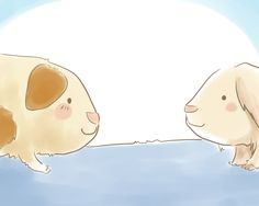 How to Introduce Two Guinea Pigs to Each Other -- via wikiHow.com