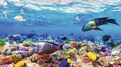 ЕГИПЕТ – морска ваканция в Шарм ел Шейх 2015 ПРОМО ЦЕНИ! – Теско Груп ЕООД