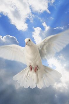 on the wings of a snow white dove, he sends his pure sweet love...