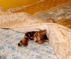 Do you ever look at your cat and think �man, you have it so easy?� | 15 Cats That Are Definitely Planning To Sleep Through The Next Four Years