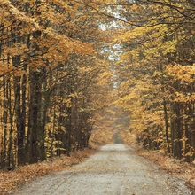 Wall Mural - Autumn Country Road. photowall.com