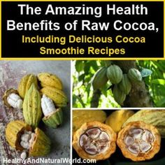 Discover the Amazing Health Benefits of Raw Cocoa, Including Delicious Cocoa Smoothie Recipes | Healthy and Natural World