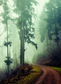 Path in the foggy forest (no location given) by Aenea-Jones