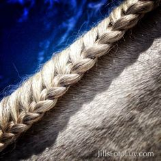 The Virginia Equine Artists Association was founded to promote, market and provide educational opportunities for Virginia Equine artists and photographers. Equine Art, Royalty Free Images, Horses, Stock Photos, Braid, Artist, Virginia, Prints, Beauty