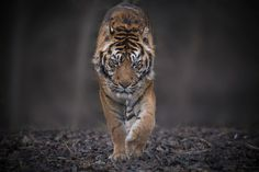 Face to Face by Erwann Maignan on 500px