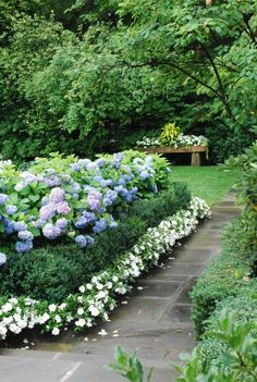 Hydrangea, boxwood, petunia/impatien formal garden