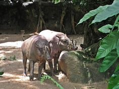 10 Intriguing Animals Whose Names Start with The Letter B ~ Babirusa