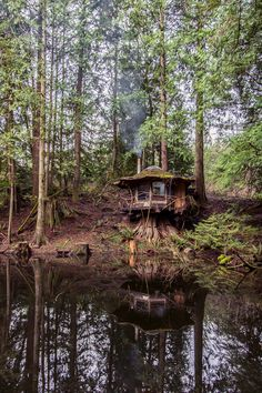 The Stump House. Old-growth stump as foundation, set on the banks of a lake Sun Ray Kelley built.