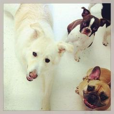 Who said dogs can't smile? Look at these grins in doggy daycare. Williamsburg, Brooklyn, NY.