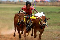 A young jockey participates in the Bull Racing Festival in Madura, Indonesia
