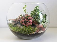 terrarium ouvert a 2 scaled Hanging Air Plants, Indoor Flowering Plants, Hanging Succulents, Succulents In Containers, Terrarium Plants, Glass Terrarium, Succulent Terrarium, House Plants Decor, Plant Decor