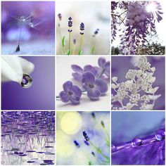 Purple And Nature Collage