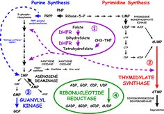 Review of Nucleotide Biochemistry