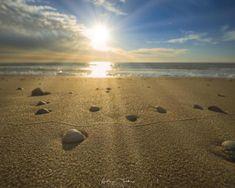 The Dutch coastline is never short of seashells. Texel the Netherlands - CaliGozer - National Photography, Nature Photography, Travel Photography, Rule Of Thirds, Landscape Photographers, Mother Earth, Sea Shells, Travel Photos, Netherlands