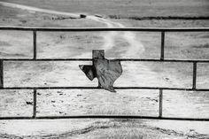 Texas Photo, State of Texas, TX, Sign, Gate, Rusty Fence, Landscape Field, Texas Wall Art, TX Home Decor, Farm, Bluebonnets, Horses, Austin Texas Wall Art, Texas Photography, Fence Landscaping, Blue Bonnets, Original Image, Gate, Horses, Landscape, Sign