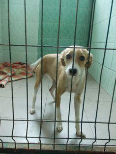 Wakacje i sporo nowych psiaków :( www.uciechow.com #psy #adopcje #schronisko
