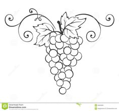 Illustration of Grape -- decorative element vector art, clipart and stock vectors. Mosaic Patterns, Embroidery Patterns, Fruit Clipart, Halloween Drawings, Tuscan Design, Wood Burning Patterns, Wine Bottle Crafts, Vintage Design, Grape Vines