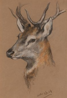Arthur Wardle, Head of a stag, Made of pastel