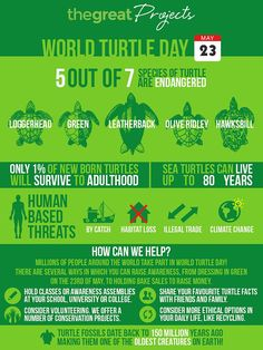 World Turtle Day 2017 - On the of May each year, conservationists and animal fans across the gl Turtle Conservation, Wildlife Conservation, Sea Turtle Facts, World Turtle Day, Human Base, Save The Sea Turtles, Save Our Oceans, Work With Animals, Turtle Love