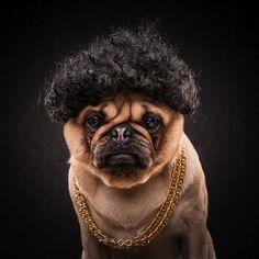 The_Pug_Life_Adorable_Portraits_Of_Lovable_Pugs_Dressed_As_Hip_Hop_Artists_2015_07