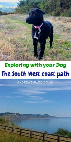 Andrewshayes Holiday Park has some Perfect Beautiful Relaxing East Devon Dog Pet Friendly WALKS for you all to go on. Enjoy the stunning Devon Countryside. Cheap Days Out, Car Parks, Dog Friendly Holidays, South West Coast Path, Jurassic Coast, South Devon, Pet Dogs, Pets, Holiday Park