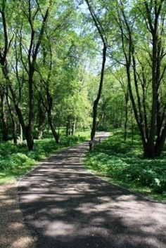 """Crosby Farm Park  Saint Paul, MN  This is where I got married.  I've also done a LOT of habitat restoration work here!!  I consider it """"my"""" park, but others get to use it too :)"""