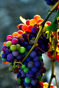 A organic wine has 80% MORE resveratrol, the healthy antioxidant, than conventional wine