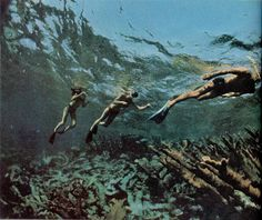 """July 1966    """"Gliding face down, they drift above gardens of living coral in waters so clear they can see a hundred feet ahead. They follow a trail marked by submerged signs, occasionally stopping to rest on giant brain corals that grow almost to the surface."""""""