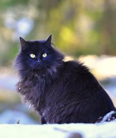 """Ancient History 