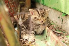 Sweet baby kittens taking a nap Animals And Pets, Baby Animals, Funny Animals, Cute Animals, Cute Kittens, Cats And Kittens, I Love Cats, Crazy Cats, Cat Sleeping