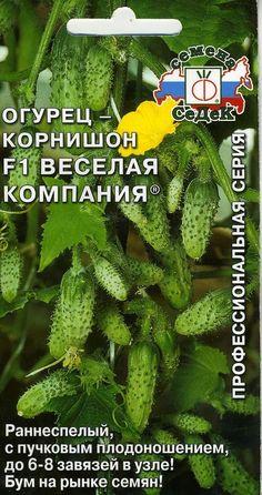 "not GMO Cucumber /""Amur F1/"" Russian High Quality"
