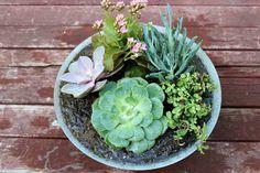 Succulent Garden - Step 6: Plant