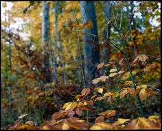 Collingwood Ontario Fall Photography trip