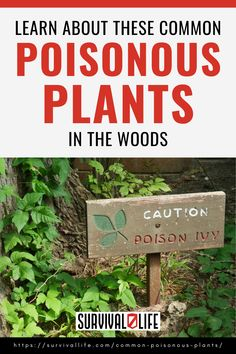 Here are some of the most common poisonous plants in the woods and how you can treat them when there's contact: #poisonousplants #survivlskills #survivaltips #survivallife Survival Life, Wilderness Survival, Survival Skills, Poisonous Plants, Outdoor Survival, Wood, Garden, Garten, Woodwind Instrument