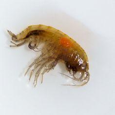 Fascinating blog from David Southall just landed on the desk. #Monday #sunrayflyfish #microthinflylines #flyfish #flyfishing #austria #grayling #comingsoon #entomology