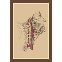 Buyenlarge 'Internal Carotid Artery' Painting Print