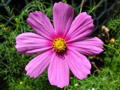 Happy Flower...