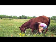 This girl is awesome. I taught my horse to bow from this!!!