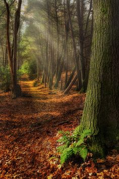 'Serenity of the Forest' - a serene trail thru the forest in Northwest Connecticut - by Bill Wakeley
