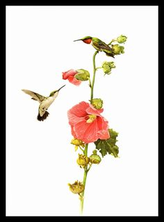 """Ruby Throated Hummingbird painted by J F Landsdowne for the book Birds of the Eastern Forest. The page is 9 1/2"""" wide and 13 inches tall. by Blossomprintsandmore on Etsy"""