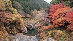 秋は晩秋だね - 鳩ノ巣渓谷、奥多摩 - みんなの写真館 - ヤマケイオンライン Yamakei Online / 山と溪谷社