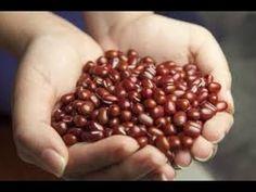 Ako a kedy sadiť fazuľu? - Ako a Prečo? Haricot Azuki, Desserts Sains, Beans, Vegetables, Food, Portal, Tips, Youtube, Baked Beans